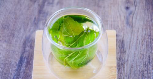 桑叶减肥搭配方法 泡水喝的多种方法图片