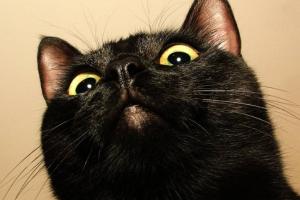 玄猫和黑猫区别值钱吗